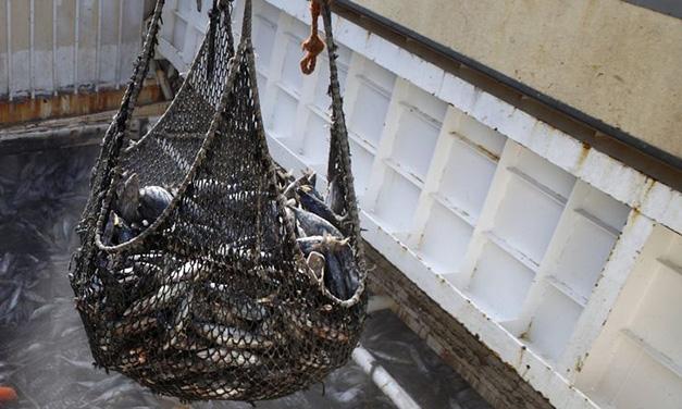 UGT convoca huelga en parte del sector de la estiba pesquera en Ribeira y A Pobra